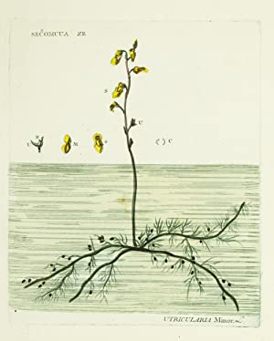 Phytonomatotechnie Universelle, c'est-à-dire, l'art de donner aux plantes des noms...