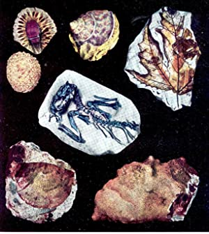 The fossil book : a record of: Fenton, Carroll Lane,