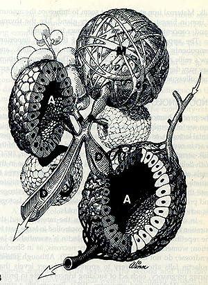 Williams Obstetrics [Human pregnancy -- Physiology of: Williams, J. Whitridge