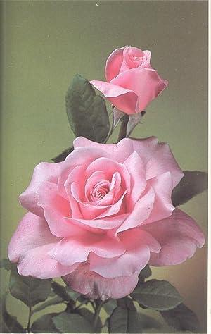 American Rose Society Annual, 1982. [Vol.67][Polyanthas: The: American Rose Society.