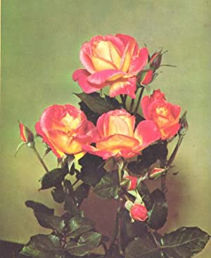 The Rose Annual, 1958. [Foliar Feeding And: H Edland, J