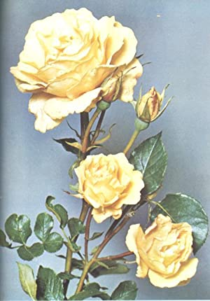 The Rose Annual, 1957. [Rose In Heraldry;: Julia Clements, H