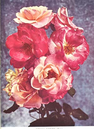 The Rose Annual 1956. [Roses At Buckingham: Oliver Mee, Gordon