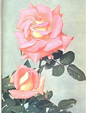 The Rose Annual 1951. [Theory & Practice: William E Moore,