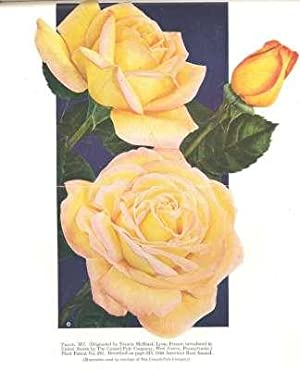 The American Rose Annual, 1947. [Hanging Gardens Of Babylon; How Roses Get Their Names; Fragrance; ...