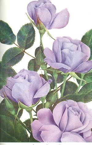 American Rose Annual, 1960. [Breeding Miniatures In: Nat Schoen Quinton