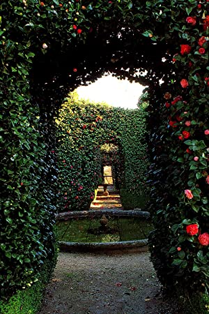 Secret gardens : revealed by their owners.: Verey, Rosemary. ;