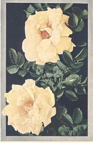 Somerset Way Pack Roses /& Gardenias Fabric Henry Glass