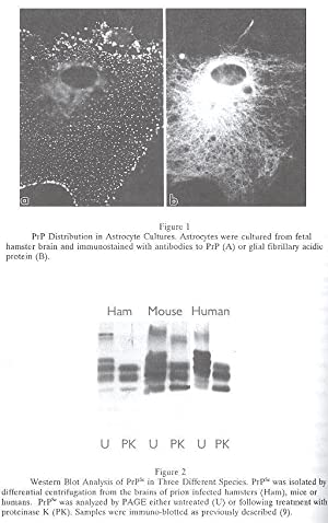 Immunological Investigations : A Journal of Molecular: Van Oss, Carel