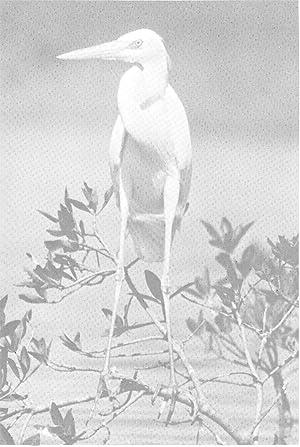 A lifetime with the birds : an: Greene, Earle Rosenbury,