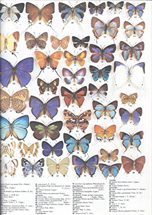 The illustrated encyclopedia of the butterfly world.: Smart, Paul.