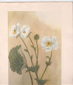 A Book of New Zealand Flora for New Zealand Boys and Girls: Coleclough, Mabel C.