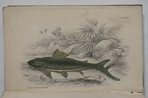 Ichthyology. Vol III. Fishes of Guiana. Part 1: Schomburgk, Robert. H