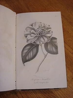 MONOGRAPHIE DU GENRE CAMELLIA. Traite Complet sur Sa Culture, avec la Description et la ...