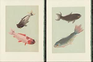 Four Blank note cards of Chinese Goldfish from Der kleine Goldfischteich Kolorierte Stiche nach C...
