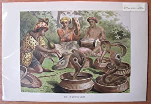 Antique Chromolithograph. Snake Charmers with Speckled Cobras.