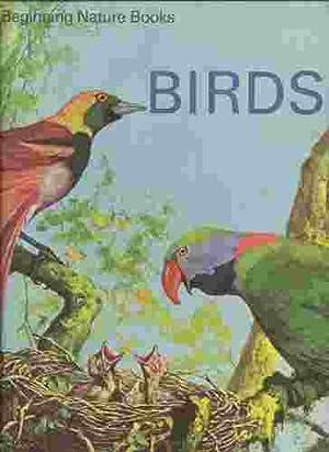BIRDS: Andrews, Martin