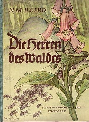 Die Herren des Waldes. Eine Ameisengeschichte.: Ilgerd, N. M.: