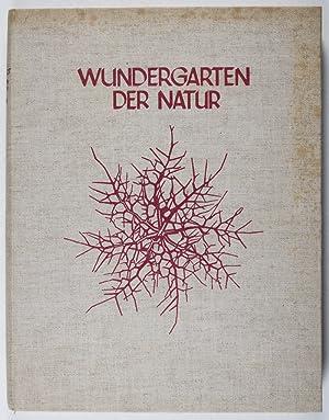 Wundergarten der Natur. Neue Bilddokumente schöner Pflanzenformen: Blossfeldt, Karl