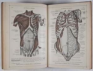 Toldt, Anatomischer Atlas für Studierende und Ärzte: Erster Band, A) Die Gegenden des ...