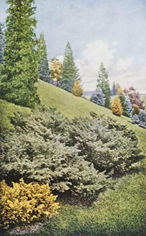 Hill's Evergreens 1926: The D. Hill Nursery Co., Inc