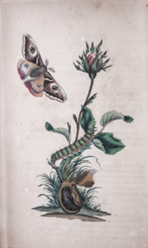 The Natural History of British Insects; explaining: Donovan, E. (Edward)
