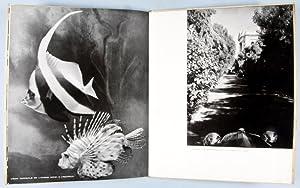Monte Carlo: Visions Photographiques: Vennemann, W.