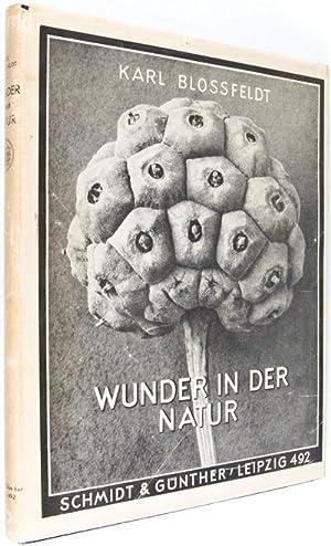 Wunder in der Natur: Bild-Dokumente schöner Pflanzenformen: Blossfeldt, Karl