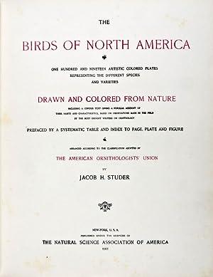The Birds of North America: Studer, Jacob H.; Theodore Jasper (illust.)