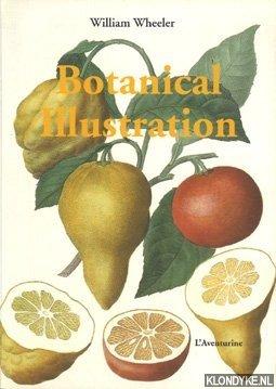 Botanical illustration: Wheeler, William