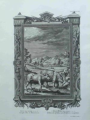 Iosephi Bos et Rhinoceros. Joseph Und Ochsen: Pintz, I.G.; Scheuchzer,