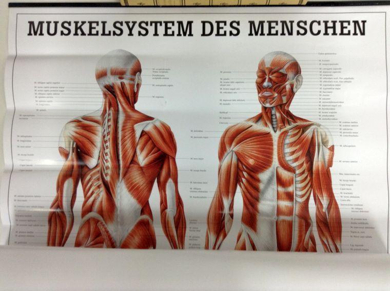 anatomie poster - ZVAB