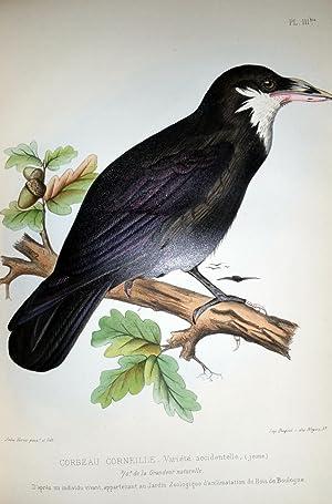 Les Oiseaux De La France: D'Aubusson, Louis Magaud