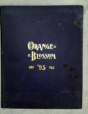 The Orange Blossom ['95]