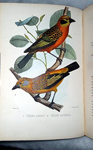 A Monograph of The Birds Forming The Tanagrine Genus Calliste [with] Synopsis of the Fissirostral ...