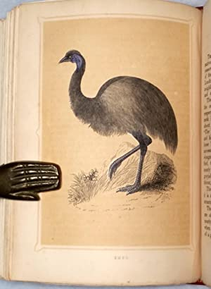 Book of Natural History; Containing a Description of Animals and Birds: Morris, F. O.