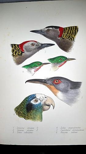The Birds of Haiti and San Domingo: Cory, Charles B.