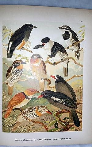 Album De Aves Amazonicas: Goeldi, Emilio A.
