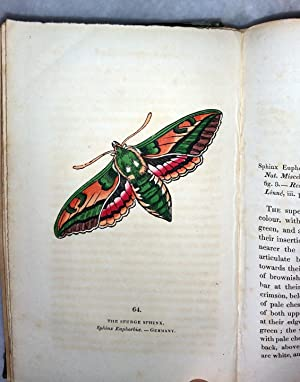 The Book of Butterflies, Sphinxes and Moths (Volume II ONLY of a two Volume set): Brown, Thomas