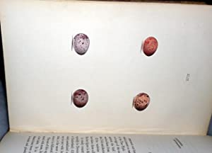 Coloured Illustrations of the Eggs of British Birds, with Descriptions of Their Nests and ...
