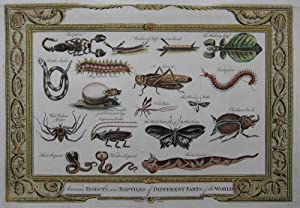 Various Insects and Reptiles of Different Parts of the World