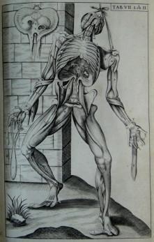 Anatomie ofte Afbeeldinghe van de Deelen des: VESALIUS ANDREAS ;