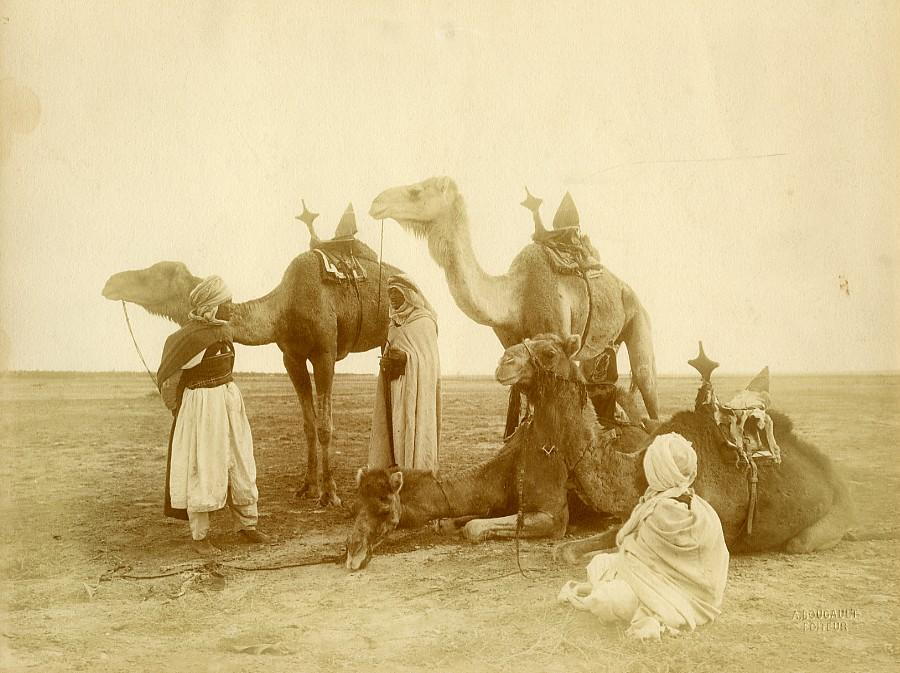 Algeria_Bedouin_Camels_in_the_Desert_old_Photo_Bougault_1900_Alexandre_BOUGAULT__