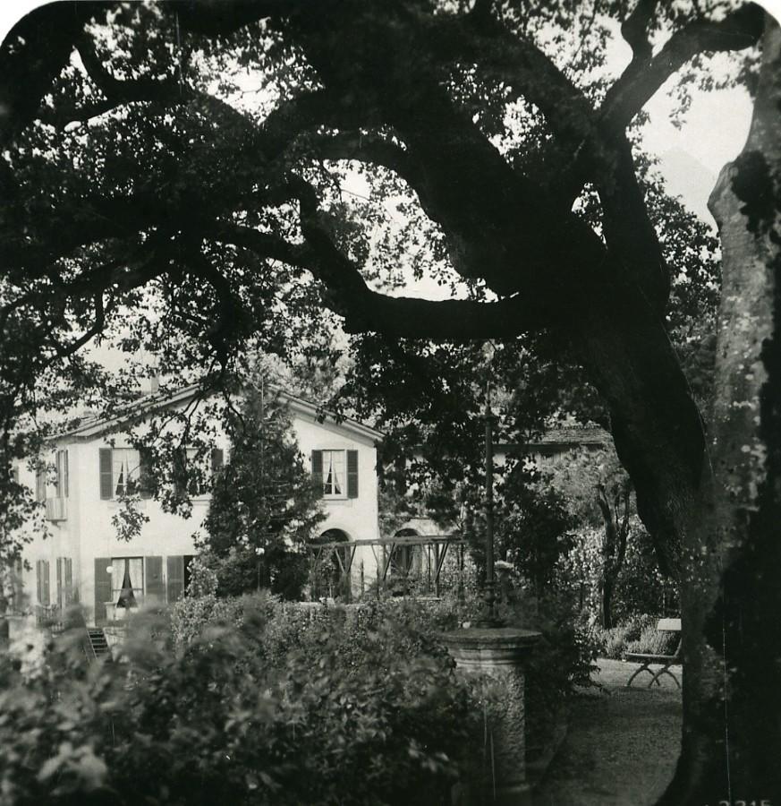 Italy_Lake_Como_Bellagio_Villa_Serbelloni_Olive_Trees_Old_Stereoview_Photo_1906_ANONYMOUS__