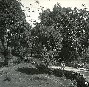 France Corsica San Gavino Juniper Wood Old: POSSEMIERS