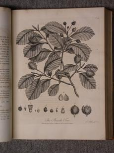Silva: Or, A Discourse Of Forest-Trees, And: EVELYN, John [1620-1706].