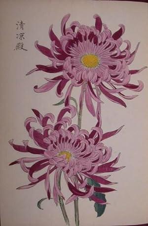 One Hundred Chrysanthemums].: HASEGAWA, Keika.