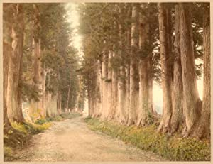 Japan The Nikko road Handcolored original photo Tamamura 1890c XL381