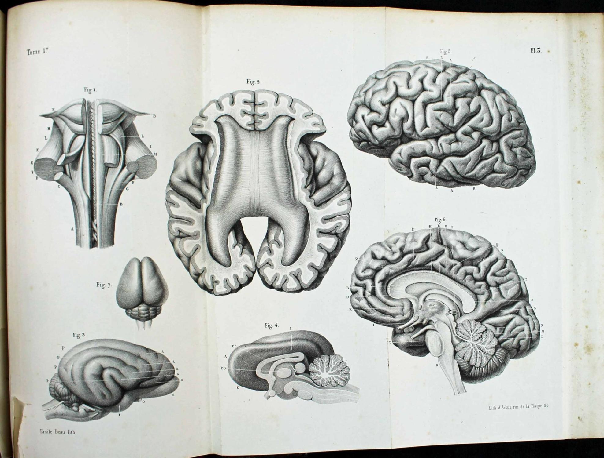 viaLibri ~ Rare Books from 1842 - Page 7
