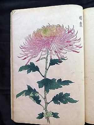 Keika hyakukiku [Illustrations of Chrysanthemums].: HASEGAWA KEIKA (tätig